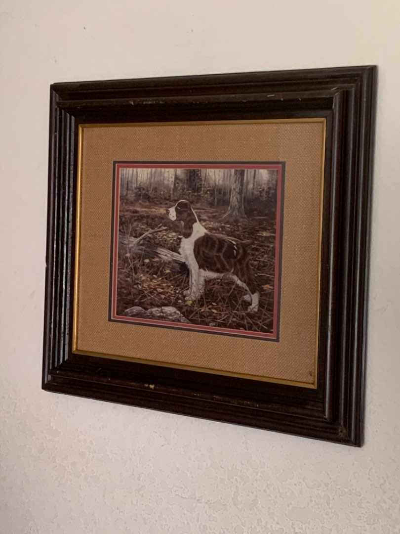 """Lot # 222 Limited Edition COA Andrew Chapman """" The Eyes Have It"""" Springer Spaniel. See Below"""