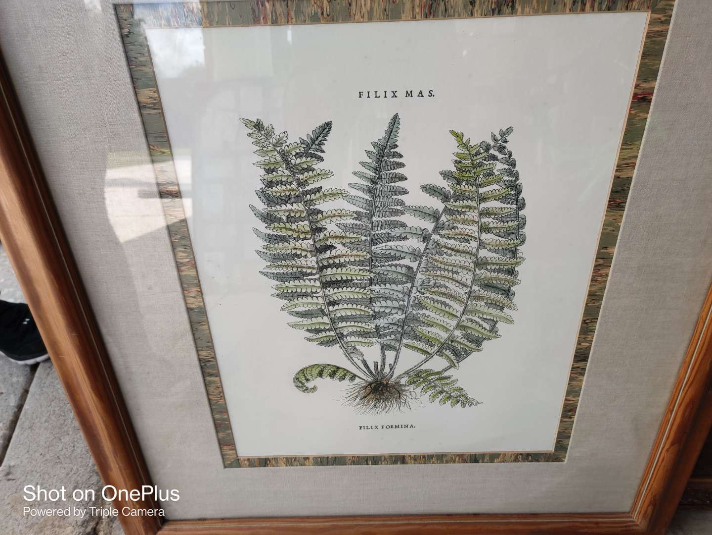 384 art signed Filix 36x31 and 1/2 framed under glass