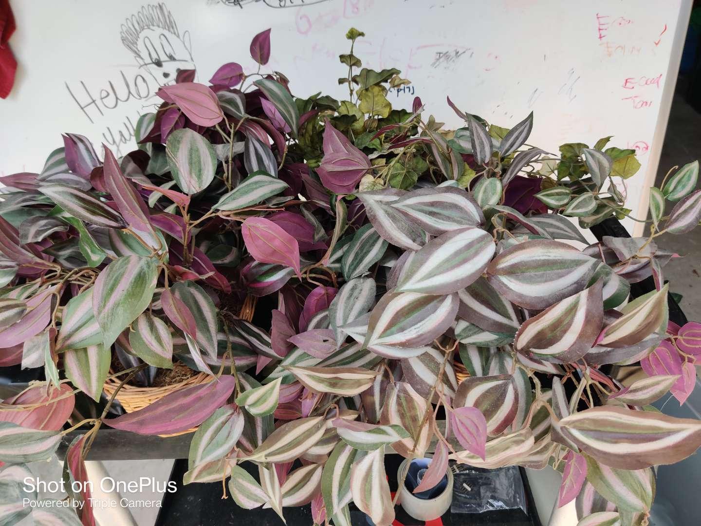 477 artificial plants two pair Gray bin