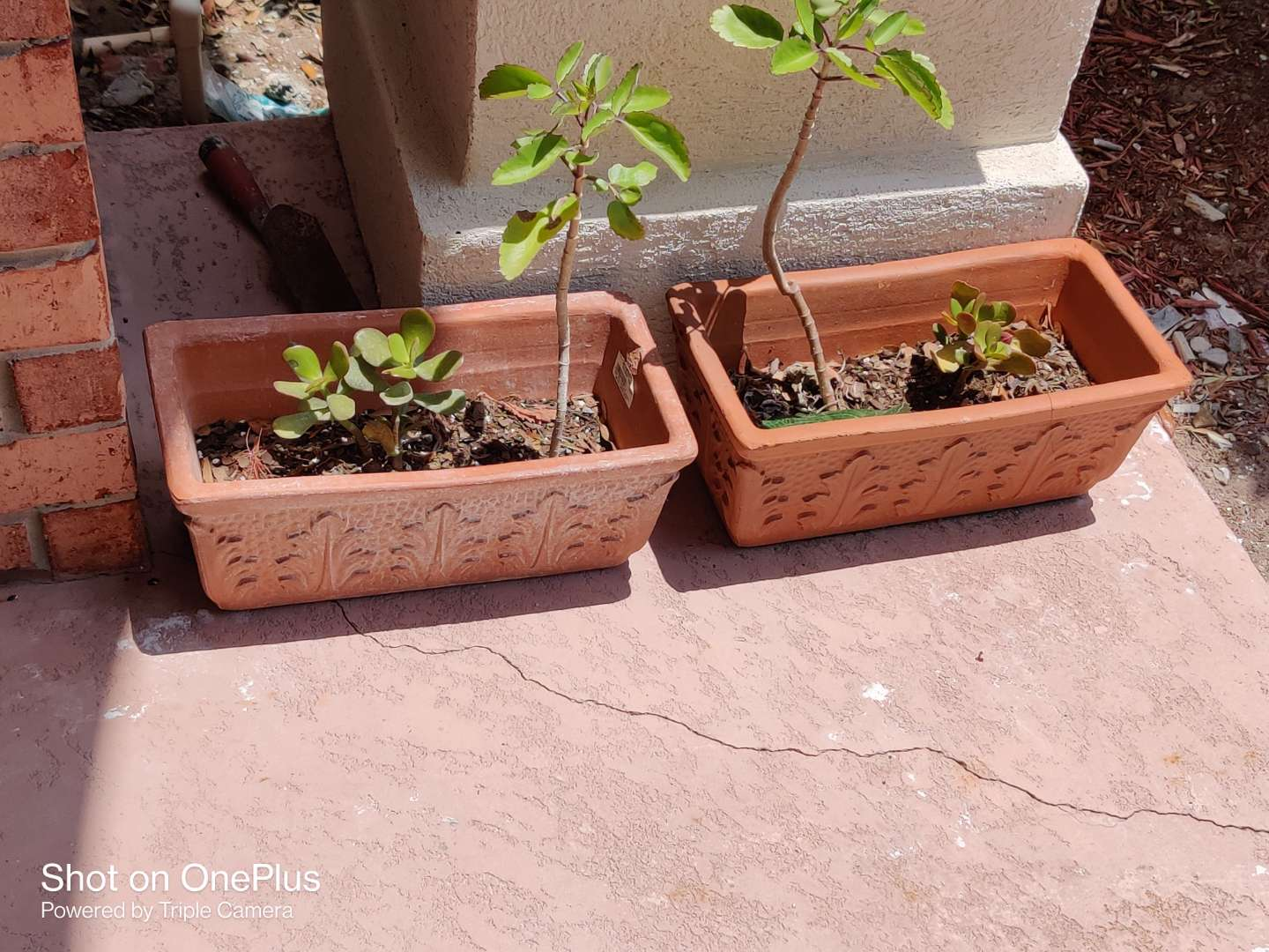 541 pair of live plants in planters