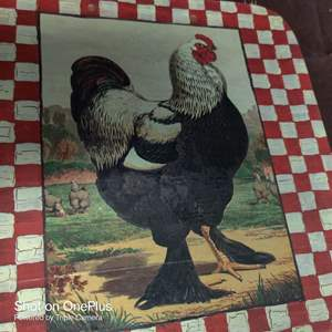 218 solid wood painted chicken nine and a half by nine and a half painted on a wood tray