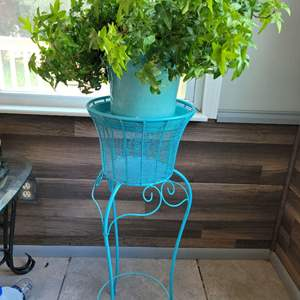 Lot # 158 House Plant & Stand