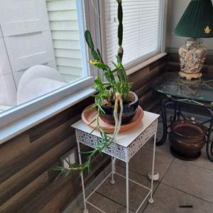 Lot # 161 Cactus & Stand