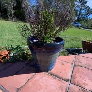 """Lot # 809 Pretty Glazed Ceramic 13"""" Flower Pot"""
