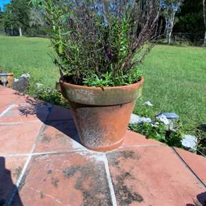 "Lot # 811 Terracotta 13"" Flower Pot - Needs Cleaning"