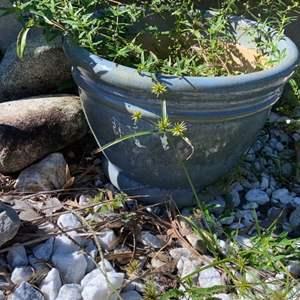 Lot # 815 Flower Pot