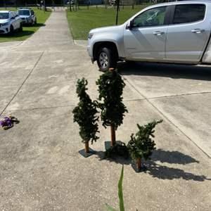 Lot # 240 Decorative Trees