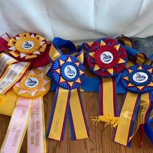 Lot # 301 Horse Show Ribbons