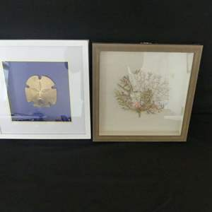 """Lot #58 Oceanic Art: Sand Dollar and Fan Coral Shadow Boxes - Each 11¾"""" Square"""