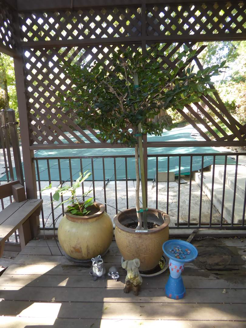 Lot # 236 - Live Tree, Cement Dog & Ceramic Planters (main image)
