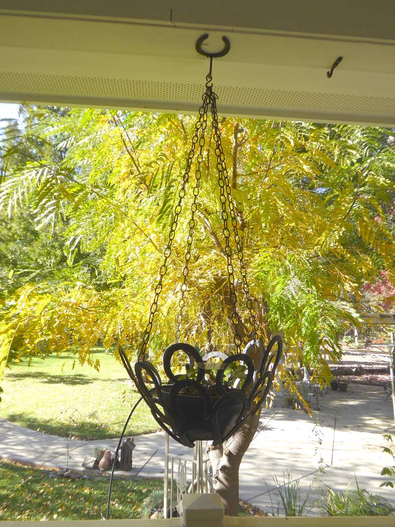 Lot # 117 - Handmade Hanging Horseshoe Planter W/Live Plant (main image)