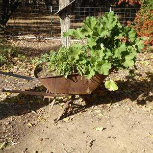 Lot # 34 - Rustic Metal Wheelbarrow Planter W/Geraniums