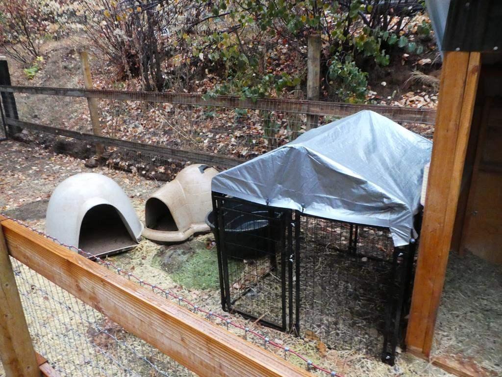 Lot # 321 - Metal Animal Pin, 2 Igloo Dog House