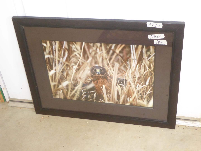 Lot # 237 - Framed Bird Wildlife Photo Image (main image)