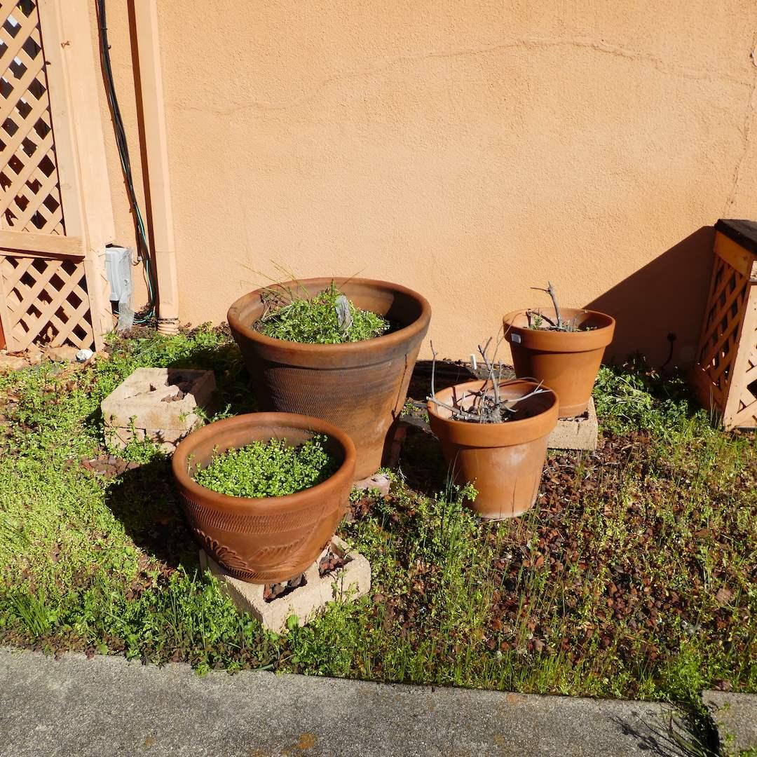 Lot # 236 - Lot of Large Terra Cotta Pots  (main image)