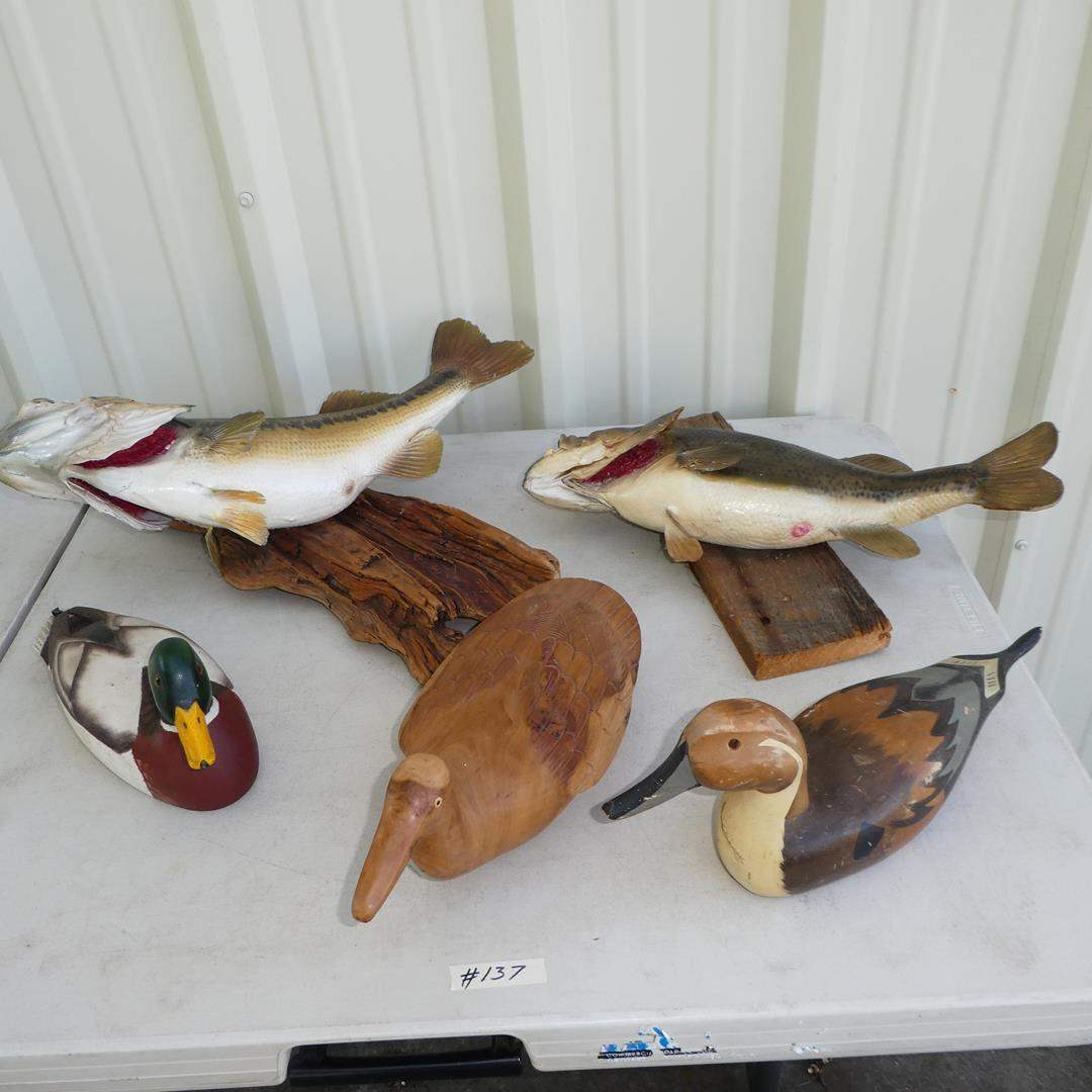 Lot # 137 - Taxidermy Bass Fish Mounts & Wooden Duck Decoys (main image)