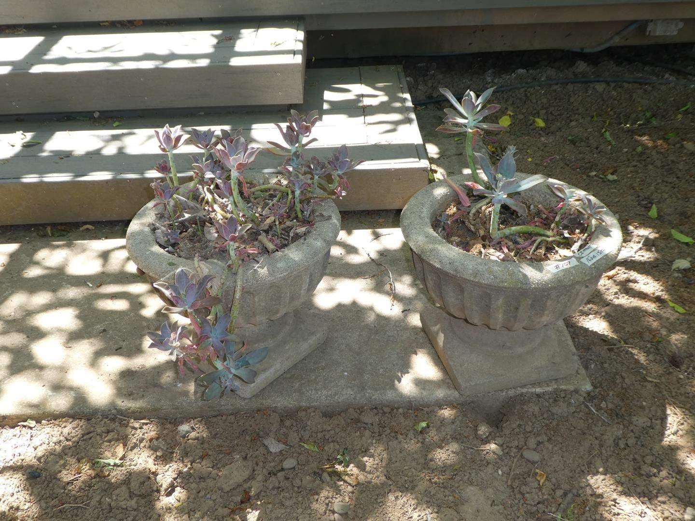 Lot # 159 - Pair Concrete Planters
