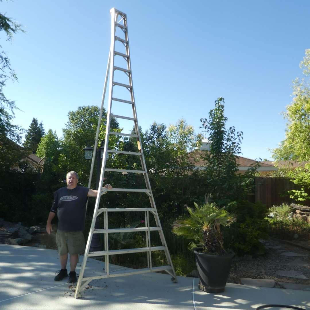 Lot # 440 - 16Ft. Orchard Ladder (main image)