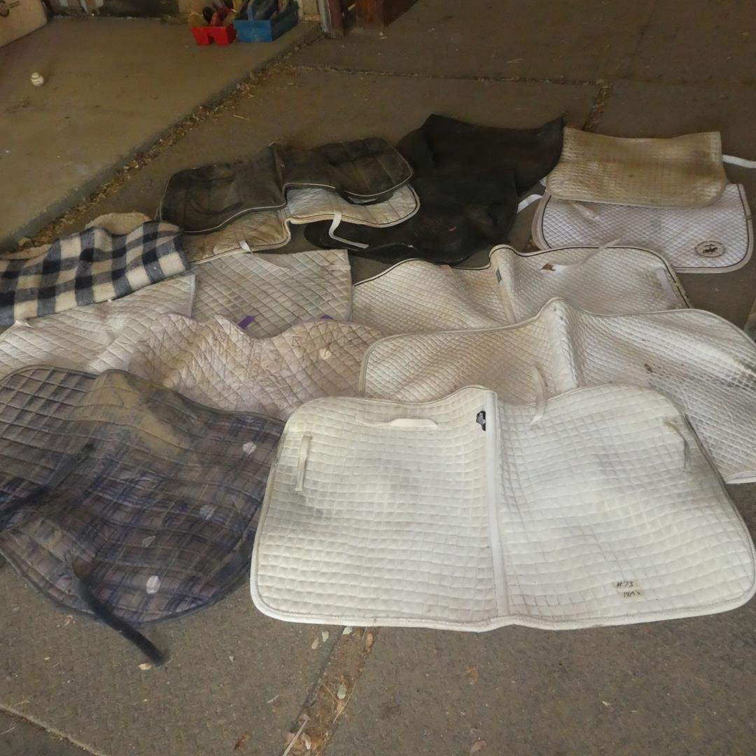 Lot # 73 - Dressage & Two Adjustment Pads (main image)