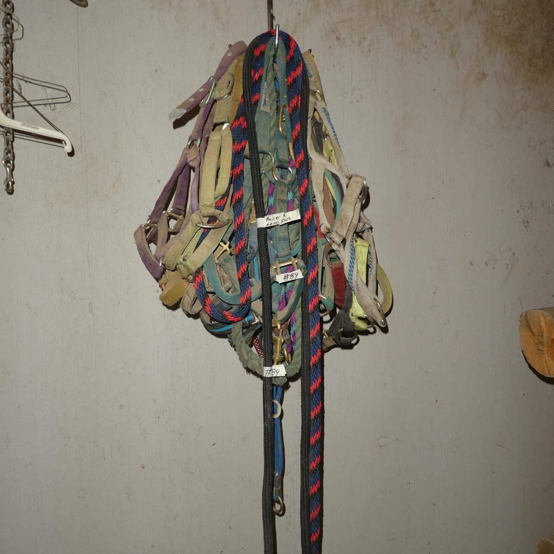 Lot # 84 - Halters & Lead Ropes (main image)
