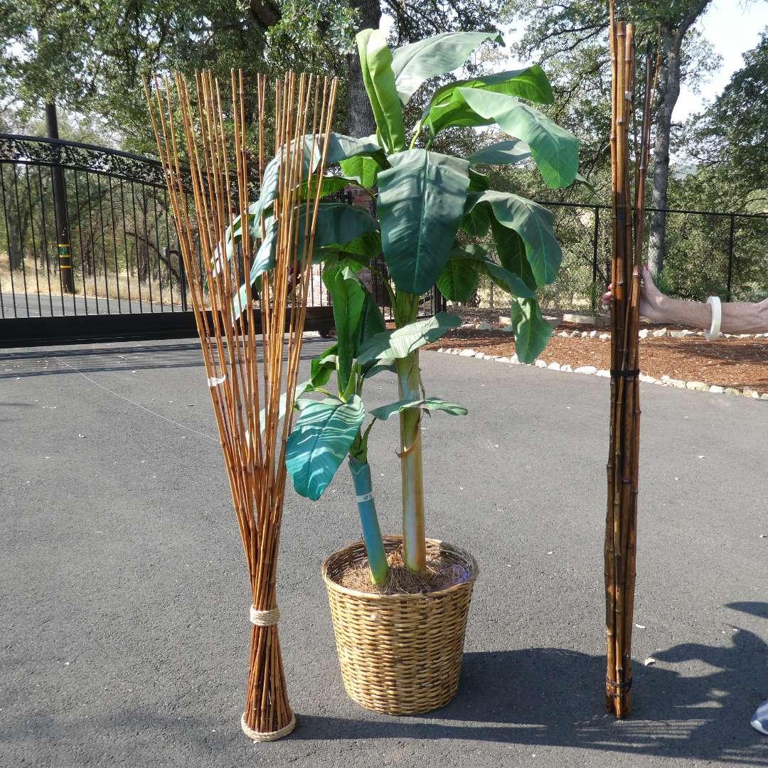 Lot # 8 - Large Faux Tree and Bamboo Decor (main image)