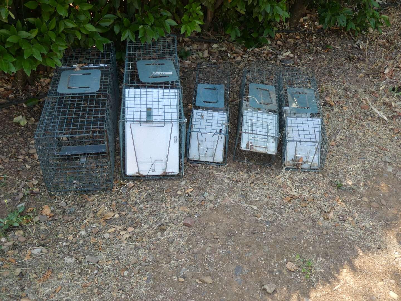 Lot # 242 - Animal Traps (main image)