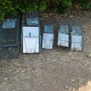 Lot # 242 - Animal Traps