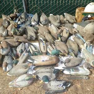 Lot # 437- Huge Lot of Duck Decoys