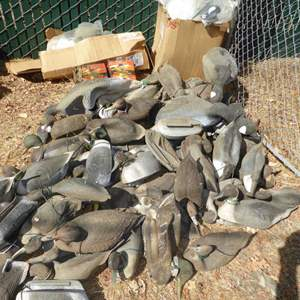 Lot # 438 -Lot of Geese Decoys