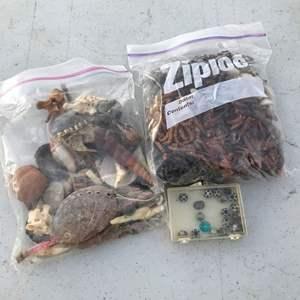 Lot # 26 - Seashells, Rocks, Necklaces