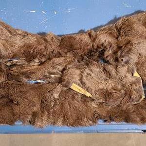 Lot # 161 - Chinchilla Fur