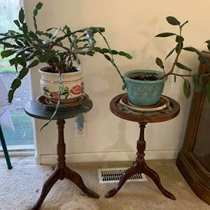 Auction Thumbnail for: Lot #21 - Two Wood Pedestal Plant Stands With Two Mature House Plants