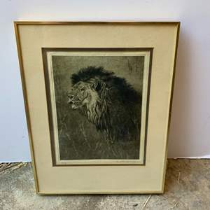 Lot #164 - South African Lion, Signed and Numbered