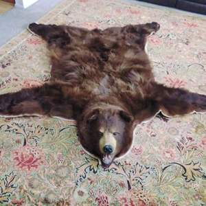 Lot #2-D:  One of the Best Bear Skin Rugs that I've Seen