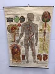 Lot #EL67 - Antique Medical Exam Room / Teaching Chart on Linen NICE!