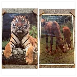 Lot #53 -  Verkerke Vintage Tiger Poster 1982 Photo by Toni Angermayer, Printed in the Netherlands & Vintage 1972 Horses Poster