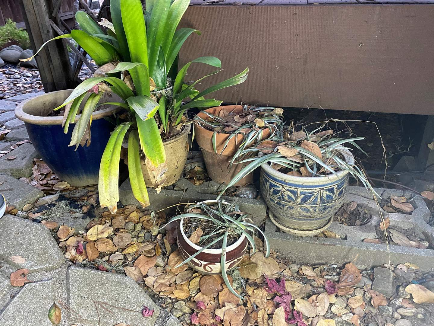 Lot # 99 - GROUPING OF CERAMIC POTS WITH PLANTS (main image)