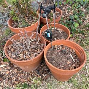 Lot # 501 - 5 Terra Cotta Pots, Assorted Sizes