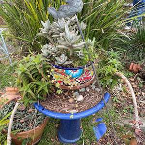 Lot # 505 - Various Potted Plants w/Bird Bath