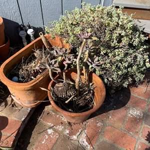 Lot # 514 - Large Terra Cotta Potted Plants