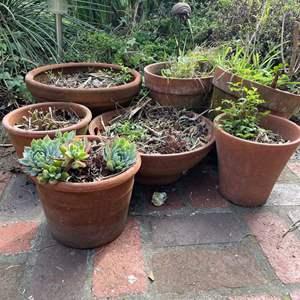 Lot #515 - Terra Cotta Potted Plants
