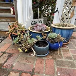 Lot # 518 - Ceramic Blue Pots w/succulents