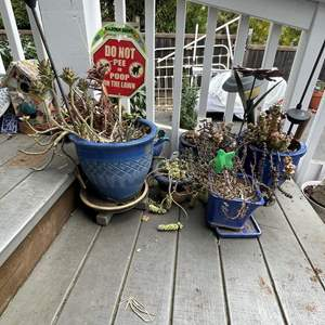Lot # 522 - Variety of  Blue Ceramic Potted Plants