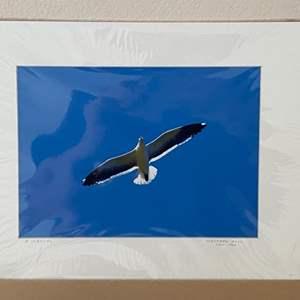 "Lot # 4 - ""Western Gull, 1999"" Ralph Wessel, Artist Photo Print"