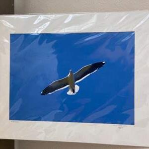 Lot # 25 - Western Gull Ralph Wessel, Artist Photo Print