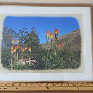 Lot # 33 - Framed 12x16 Red Hot Poker Ralph Wessel, Artist Photo Print