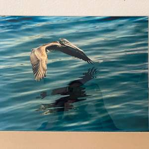 Lot # 36 - 12x17 Brown Pelican Ralph Wessel, Artist Photo Print