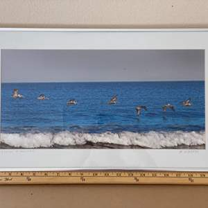 "Lot # 37 - 12x21 String ""O"" Pelicans Ralph Wessel, Artist Photo Print"