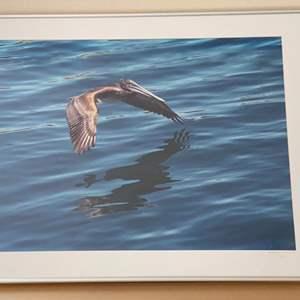 Lot # 43 - Framed 30x40 Brown Pelican Ralph Wessel, Artist Photo Print