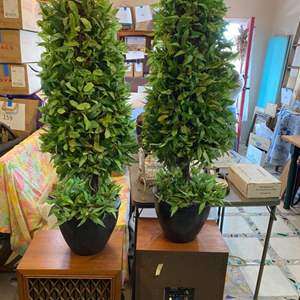 Lot # 185 - Two matching topiaries 3' tall